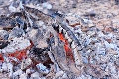 从树的煤炭和在火的橙色火焰 免版税库存照片