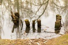 从树的Bren在与反射的水中 库存图片