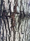 从树,灰色和棕色颜色纹理背景吠声的样式  库存图片