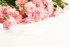 从桃红色康乃馨花的框架 免版税图库摄影