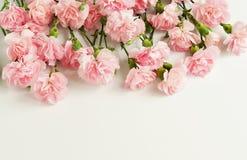 从桃红色康乃馨花的框架 库存照片