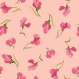 从桃红色花的花卉无缝的背景 免版税库存图片