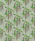 从桦树柔荑花的无缝的纹理 库存图片