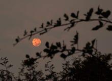 从森林火灾的烟污染在不列颠哥伦比亚省dur的空气 免版税库存照片