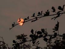 从森林火灾的烟污染在不列颠哥伦比亚省dur的空气 免版税图库摄影