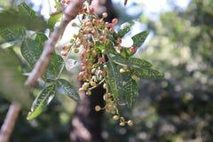 从森林的小的野生莓果 免版税图库摄影