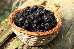 从森林的新鲜的黑莓篮子 免版税库存照片
