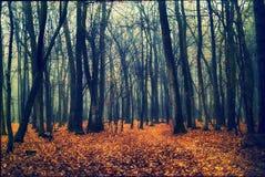 从森林的深度的雾 免版税库存图片