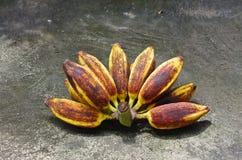从森林的香蕉 库存照片