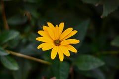 从森林的黄色花 免版税库存照片