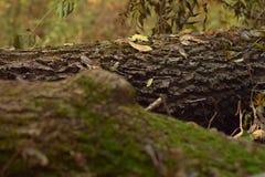 从森林的黄色花 库存图片