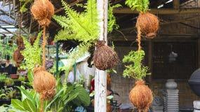 从椰子果壳的植物容器在庭院里 免版税库存图片