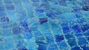 从水处理的泡影在游泳池 股票视频