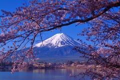 从河口湖日本的富士山和樱花 免版税库存图片