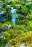 从沿弓谷大路班夫国家公园,亚伯大,加拿大的Aken 免版税库存照片