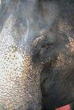从泰国的大象眼睛 库存照片
