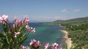 从海岸线和海滩聚焦在Thassos海岛,希腊变粉红色花 影视素材