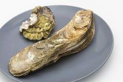 从海特写镜头的牡蛎 免版税库存照片