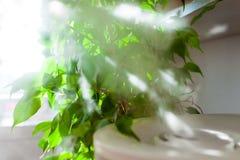 从润湿器的蒸气在太阳光 免版税库存图片