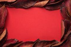 从深红叶子的框架有文本的空的拷贝空间的 深充满活力的绯红色颜色 感恩秋天时尚华伦泰 免版税库存图片