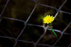 从滤网的花 库存照片