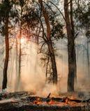 从灼烧的森林的火焰和烟上升 免版税库存图片