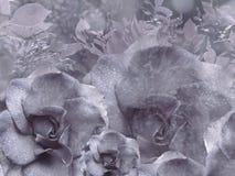 从玫瑰的花卉浅紫色的背景 背景构成旋花植物空白花的郁金香 与水滴的花在瓣 特写镜头 免版税库存图片