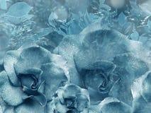 从玫瑰的花卉绿松石背景 背景构成旋花植物空白花的郁金香 与水滴的花在瓣 特写镜头 免版税图库摄影