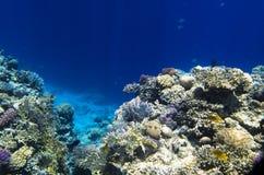 从珊瑚的礁石岩石 库存图片