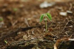 从生长一点植物的新的希望从地球 免版税库存照片