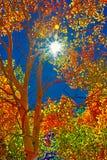 从白杨木、天蓝色的天空和太阳的精采颜色 库存照片