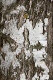 从白桦树皮的背景 免版税库存图片