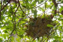 从的蚂蚁巢叶子 免版税图库摄影