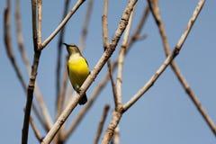 从的蜂鸟 Nature';s世界 免版税图库摄影