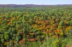 从监视线索的秋天颜色在阿尔根金族公园 免版税库存照片