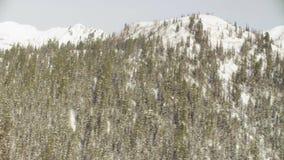 从直升机飞行的鸟瞰图在西伯利亚的山的森林 股票视频
