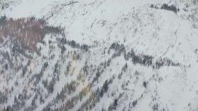 从直升机飞行的鸟瞰图在西伯利亚的山的森林 影视素材