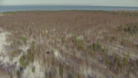 从直升机飞行的鸟瞰图在西伯利亚的森林 股票录像