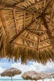 从看对其他伞的棕榈树伞下面, 免版税库存图片
