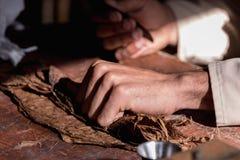 从真实的古巴雪茄的干燥烟草叶子包裹的手特写镜头  图库摄影