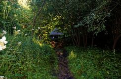 从石头的道路在森林里在夏天 免版税库存照片