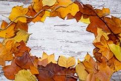 从秋叶圈子的五颜六色和明亮的背景,在破旧的白色木背景 秋天概念查出的白色 免版税库存图片