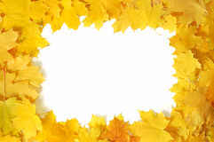 从秋叶的框架 免版税库存照片