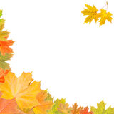 从秋叶的框架 免版税库存图片