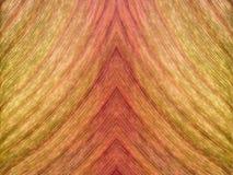 从秋天叶子的片段的macrofoto的自然样式 库存图片