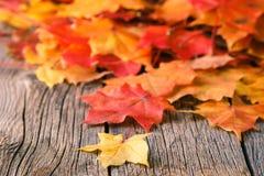 从秋天槭树叶子的装饰背景框架 免版税库存照片