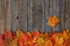 从秋天槭树叶子的装饰背景框架 库存照片