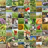从种田和产品的农业拼贴画 库存图片