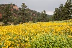 从科罗拉多落矶山的风景场面 免版税图库摄影