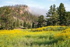 从科罗拉多落矶山的风景场面 库存照片